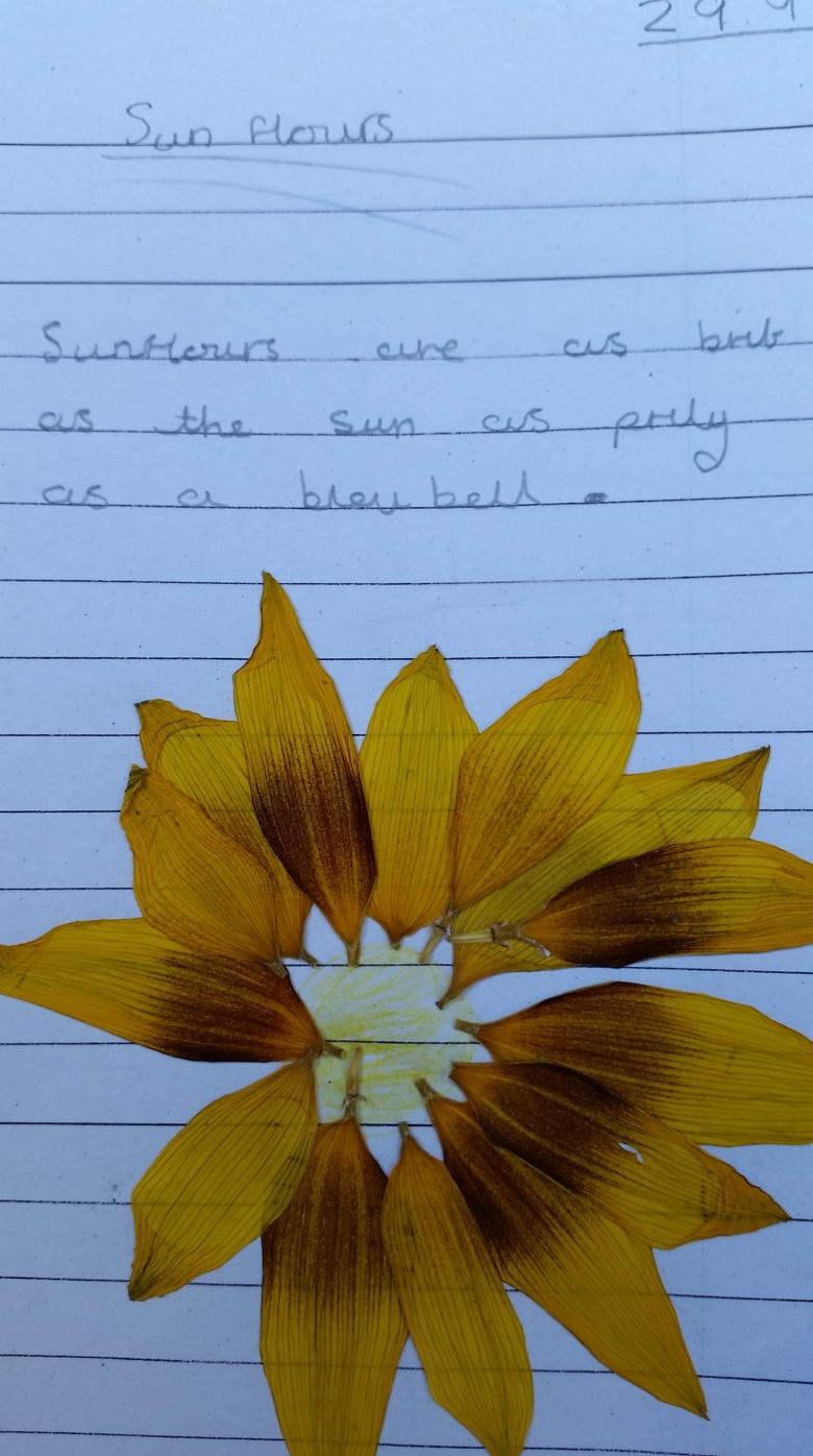 Childrens collage and description of sunflowers